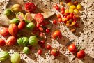 Tomato by food by Sydney based food and lifestyle photographer Benito Martin.